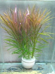 Thủy Sinh Tuấn Anh-Chuyên cây & Rêu Thủy Sinh, Cá Cảnh Biền & Hồ Cá Cảnh Biển - 35