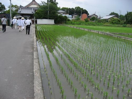 一宮寺付近で田植えの終わった風景