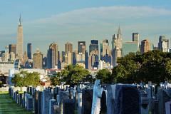 city behind the woods. (Tony Shi Photos) Tags: new york nyc ny building cemetery skyline skyscraper un chrysler metlife distance dense     thnhphnewyork