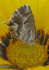 farfalla sul fiore (4)