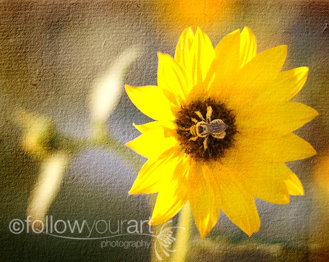 Pollen Jock