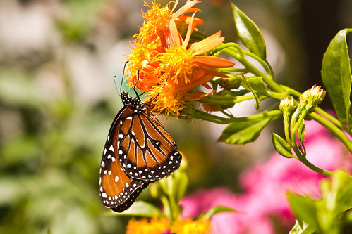 Precious Nectar