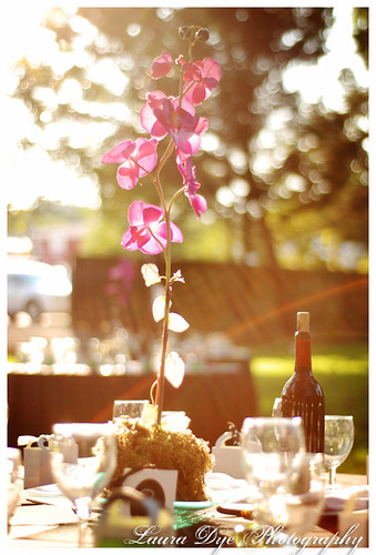 sundrenched centerpiece
