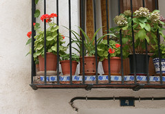 Blooming (Lemon-kisses) Tags: blue white black iron pretty balcony tiles oh walls though wrought yetagain andits inspain