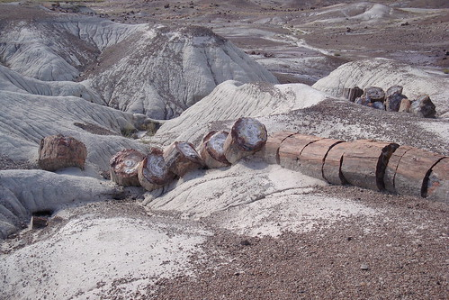Petrified Logs