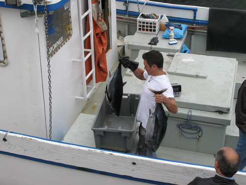 Selling Yellowfin tuna at Pillar Point Harbor
