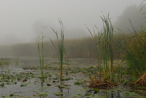 Marsh in early morning