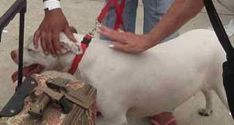 Kinship Circle - 2008-09-10 - Animal Evacuations In A Post-Katrina World 11