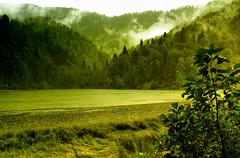 Green Dreams ( alemdag ) Tags: lake tree green nature rain fog turkey landscape landscapes trkiye turkiye natura panasonic sis artvin mehmet trabzon manzara yeil fz50 aa bayrak gl sanat fotoraf yamur doa tabiat renkler alemda alemdag karagl panasonicfz50 colorphotoaward borka mehmetalemda