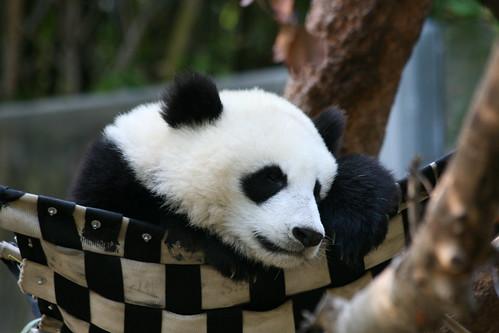 Zhen Zhen