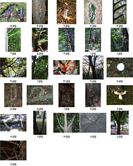 Alphabet in Nature (kaylasnapshot) Tags: trees light plants nature alphabet frass