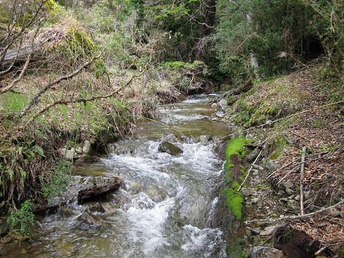 Estero principal de Las Cascadas