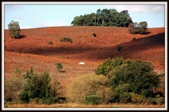 New Forest Autumn (Nige H (Thanks for 6.5m views)) Tags: new forest gmt