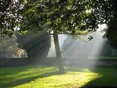 Haze rays (Pangaia (en velo)) Tags: park uk autumn trees light shadow england sun sunlight green fall nature grass leaves outdoors ray shine britain lawn swindon diagonal rays wiltshire shiningthrough dreamscapes patchoflight cmwdgreen thisisexcellent fullyfilled