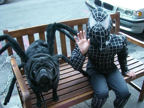 Spider-Dog and Spider-man