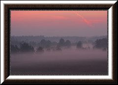 Autumn & Fog (MadonnaJ) Tags: las autumn misty fog forest sunrise poland polska jesie mga