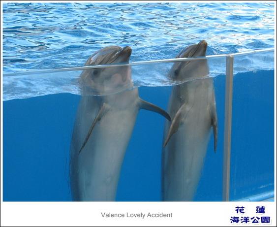 花蓮海洋公園海豚秀