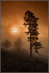Misty morning trees (Girthmeister) Tags: trees sun mist silhouette misty fog sunrise landscape geotagged dawn surrey 5d leithhill 24105mm geo:lat=51175876 geo:lon=0372401