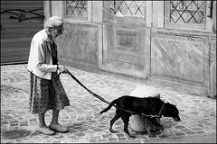 Torino 0127 (malko59) Tags: street urban blackandwhite dog cane torino explore turin biancoenero blackdiamond diecicento malko59 neroametà marcopetrino