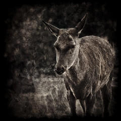 Textured deer (manganite) Tags: park portrait texture nature monochrome face closeup sepia digital germany dark square geotagged eyes nikon europe bonn tl head framed overlay monotone doe deer d200 nikkor dslr toned vignette roe textured wildgehege kottenforst northrhinewestphalia 18200mmf3556 utatafeature manganite nikonstunninggallery animalsanimals repost1 date:year=2008 date:month=october date:day=12 naturparkkottenforstville geo:lat=5069053 geo:lon=7102145 format:orientation=square format:ratio=11 repost2