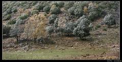 Primeras nieves (nXpected) Tags: forest sierra cazorla fresnedilla paisajea