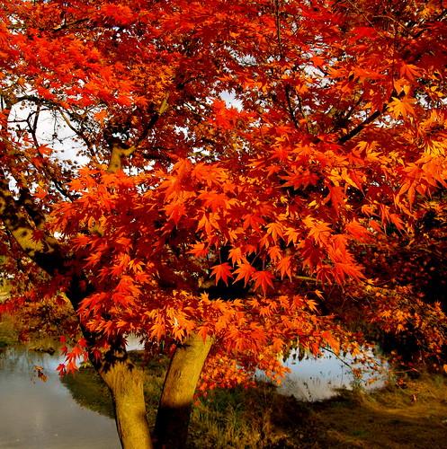 glowing tree ...