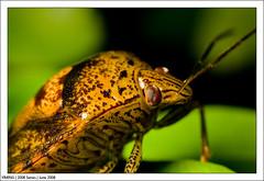 June_IMG_9878 (yimING_) Tags: macro ant bugs bee canonmpe65 dragonflydamselcanon mpe65macrobugsantbeedragon
