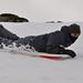 snow bodyboard