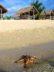West Shore (Storm Crypt) Tags: sea nature marine waterfront starfish philippines shore seashore pilipinas marinelife puertoprincesa palawan wowphilippines hondabay starfishisland easternpalawan