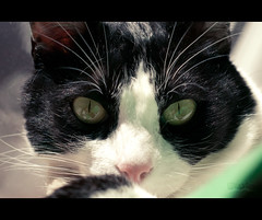 So much inside his eyes (gael_1985) Tags: cat nikon feline gato felino gat d60 nikkor50mm18 nikond60 fel