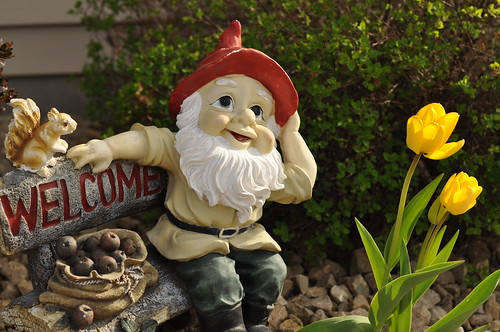 Little Garden Gnome with Tulips