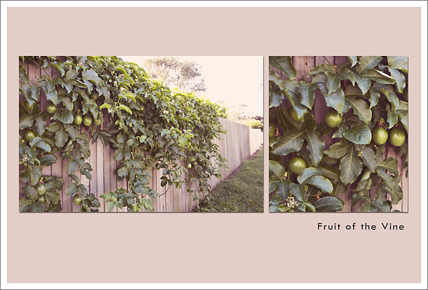 May 11 - Fruit of the Vine