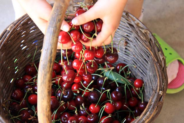cherries gloria3