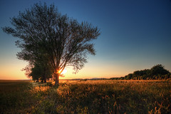 Veszprm Sunset (TheFella) Tags: road county trees sunset sky tree slr field digital photoshop canon landscape eos golden photo high europe hungary dynamic budapest row photograph