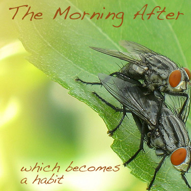 The Morning After Album Cover Art