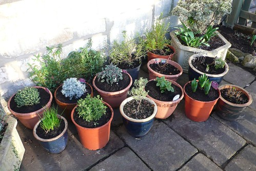 pot-garden