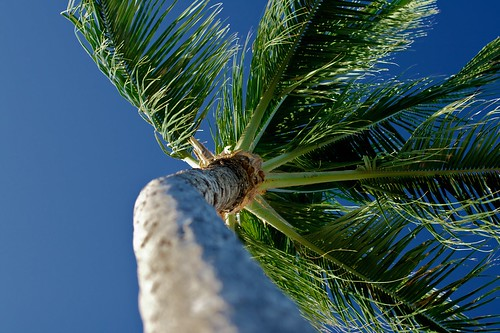 Palm Tree, Ko Olina, Oahu, Hawaii