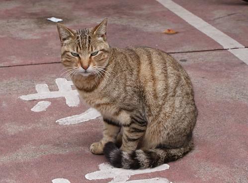 ちょっと人(猫)相は悪いけど、性格はいいのよ