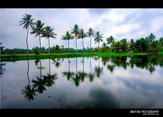 - Kerala, India (Smevin Paul - Thrisookaran !! www.smevin.com) Tags: l love pics aplusphoto naturesfinest malayalikkoottam smevin paul smevinpaul contact d40x nikon 1855 thrisookaran thrissur kuriachira kerala india trichur trisoor nature alleppy alapuzha back water coconut trees shadows green landscape gods own country sky beauty photos photography smevins