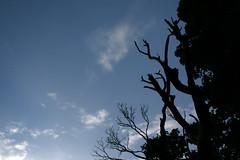 And then there were trees (bitsOfBobs) Tags: trees beach silhouette bluesky treeline balmaha balmahabeach
