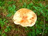 Suze Mushrooms