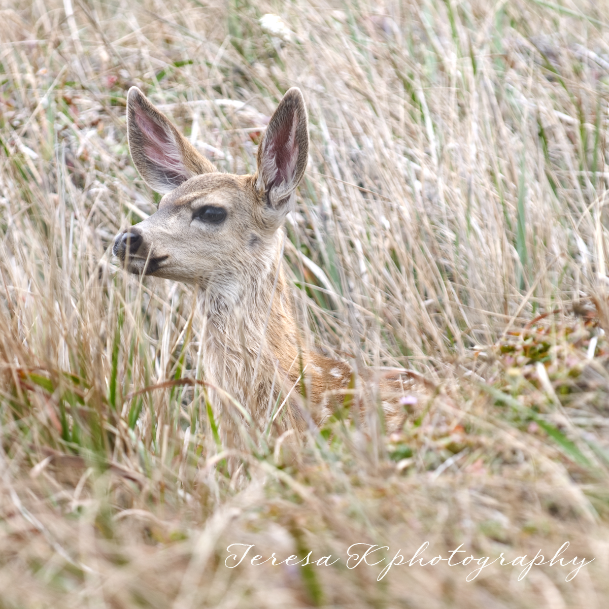 Camouflaged in Point Reyes, California by Teresa K photography