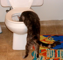 Xena drinking out of the toilet