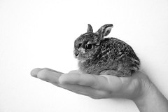 It's Mimo! (marin.tomic) Tags: blackandwhite bw cute rabbit bunny animal nikon hare hand sweet mimo explore minimalist gettyimages d40