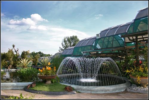 KL Orchid farm