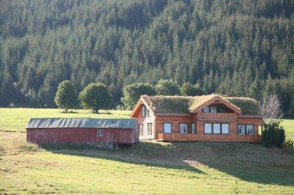 Modern turf roof