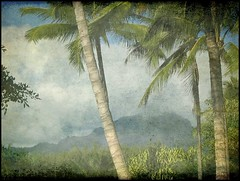 Kauai Palms--Textured! (Kurlylox1) Tags: blue trees mountains texture nature misty clouds painting palms hawaii kauai vegetation trunks fronds anawesomeshot ysplix