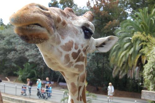 Oakland Zoo - Benghazi