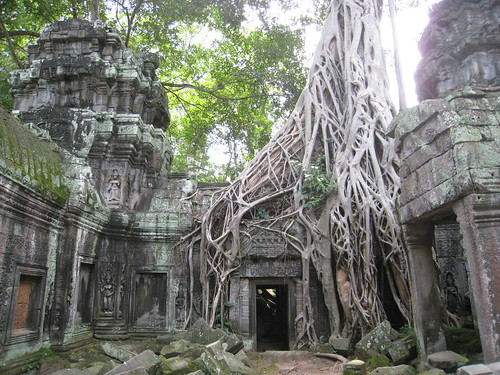 The most photographed tree at Ta Prohm