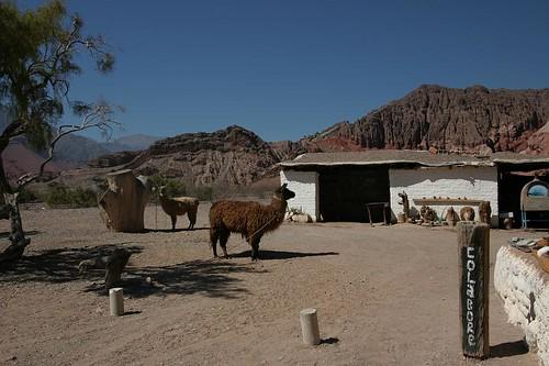 Llama in Quebrada de Cafayate - amazing scenery.